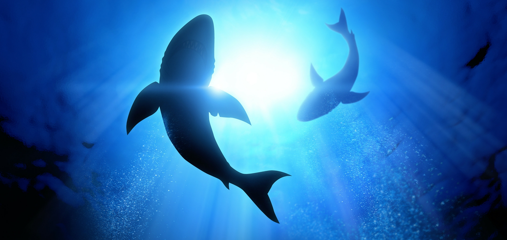 Shark Week: Protecting our sharks