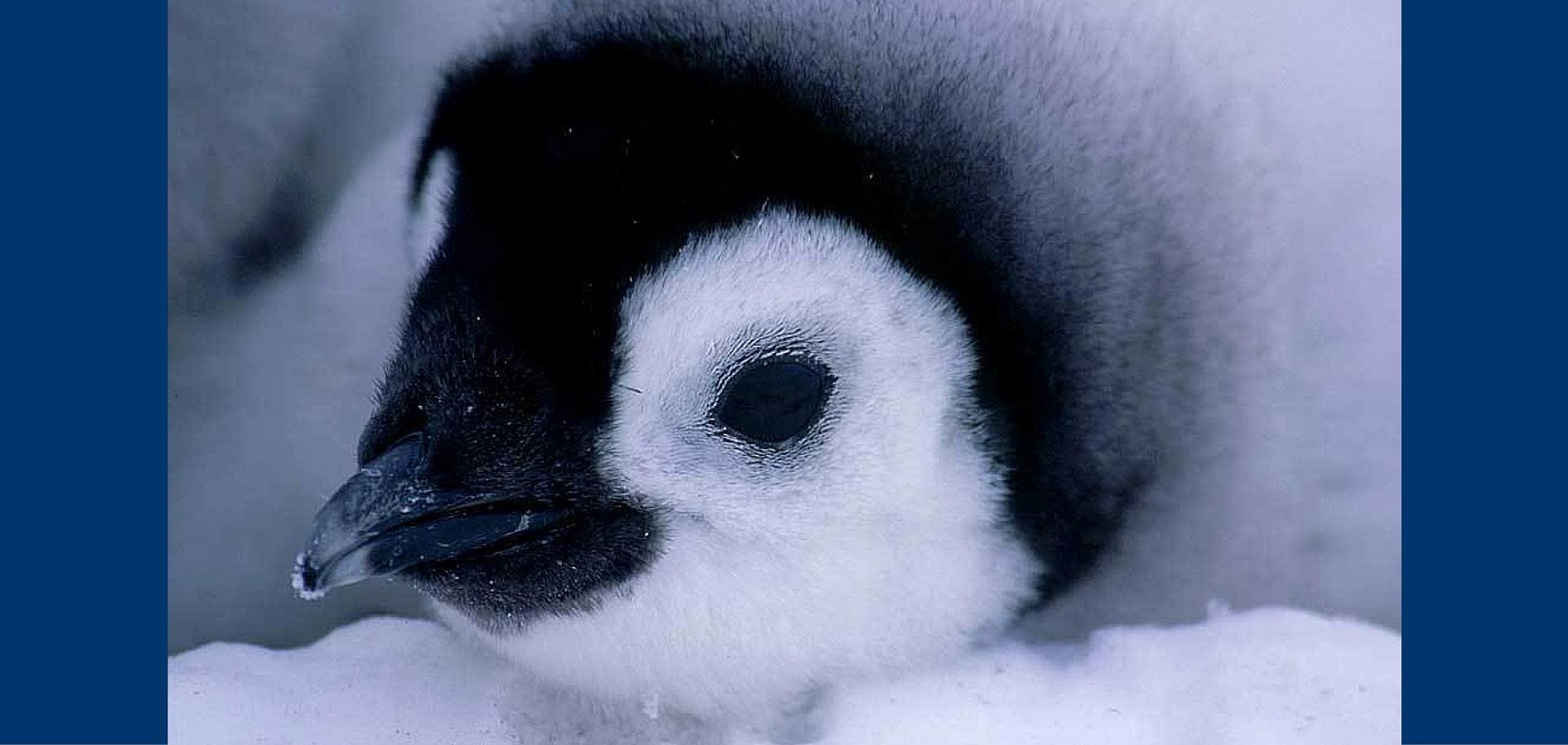 World Penguin Day!