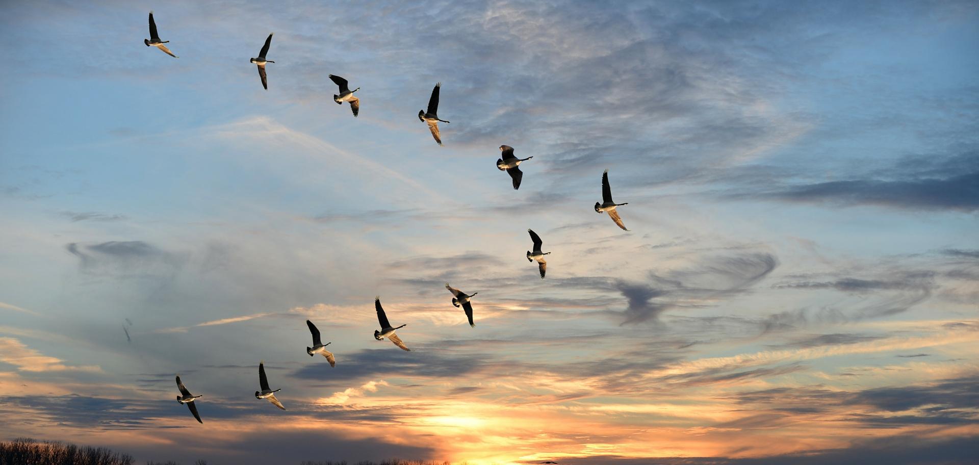 Top 10 Endangered Bird Species