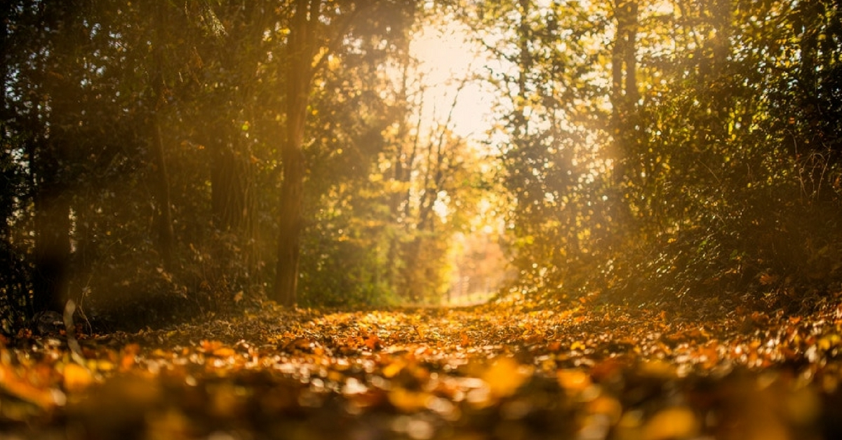 5 Best Fall Workouts
