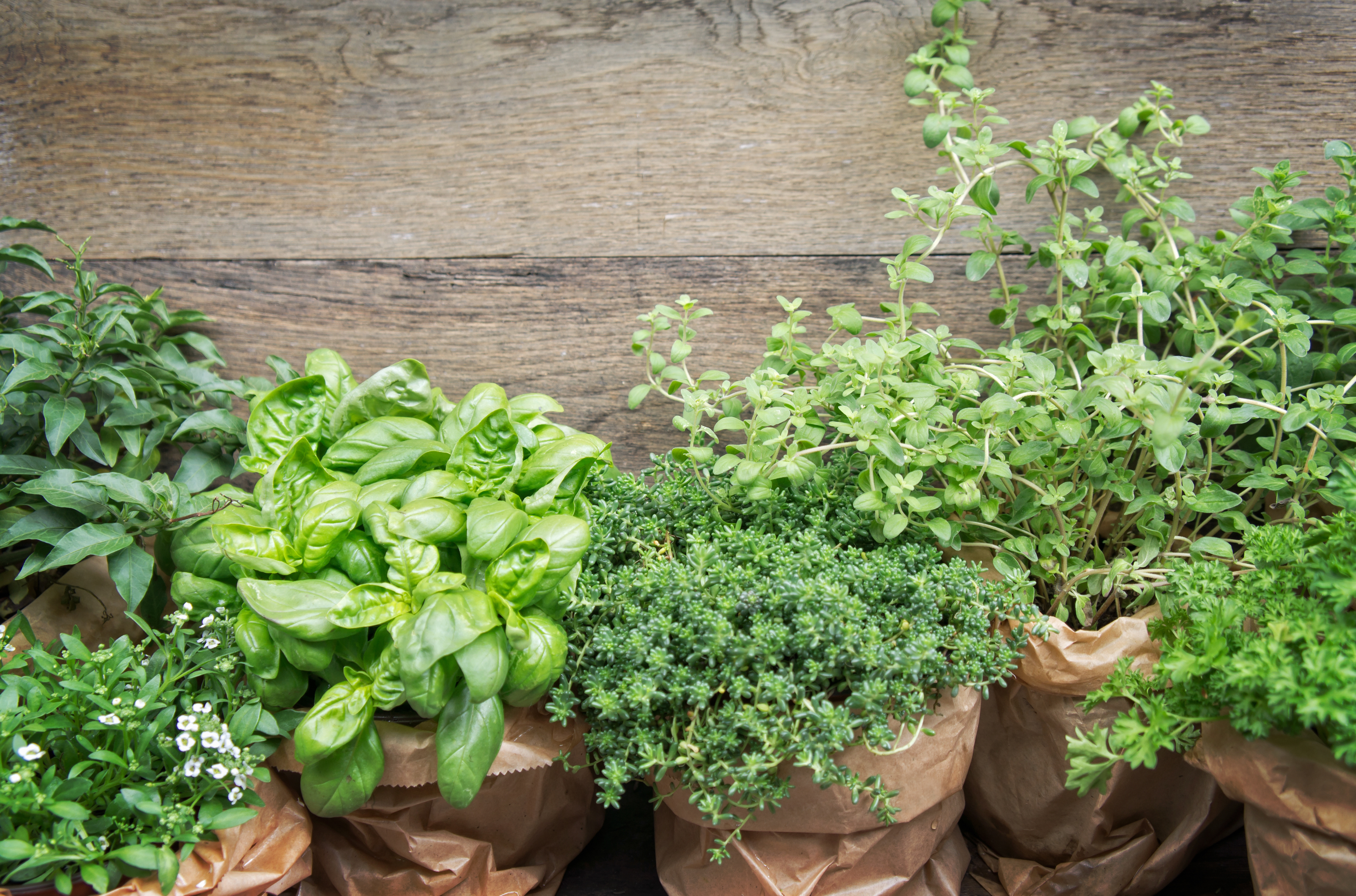 GETTING STARTED WITH HERBS