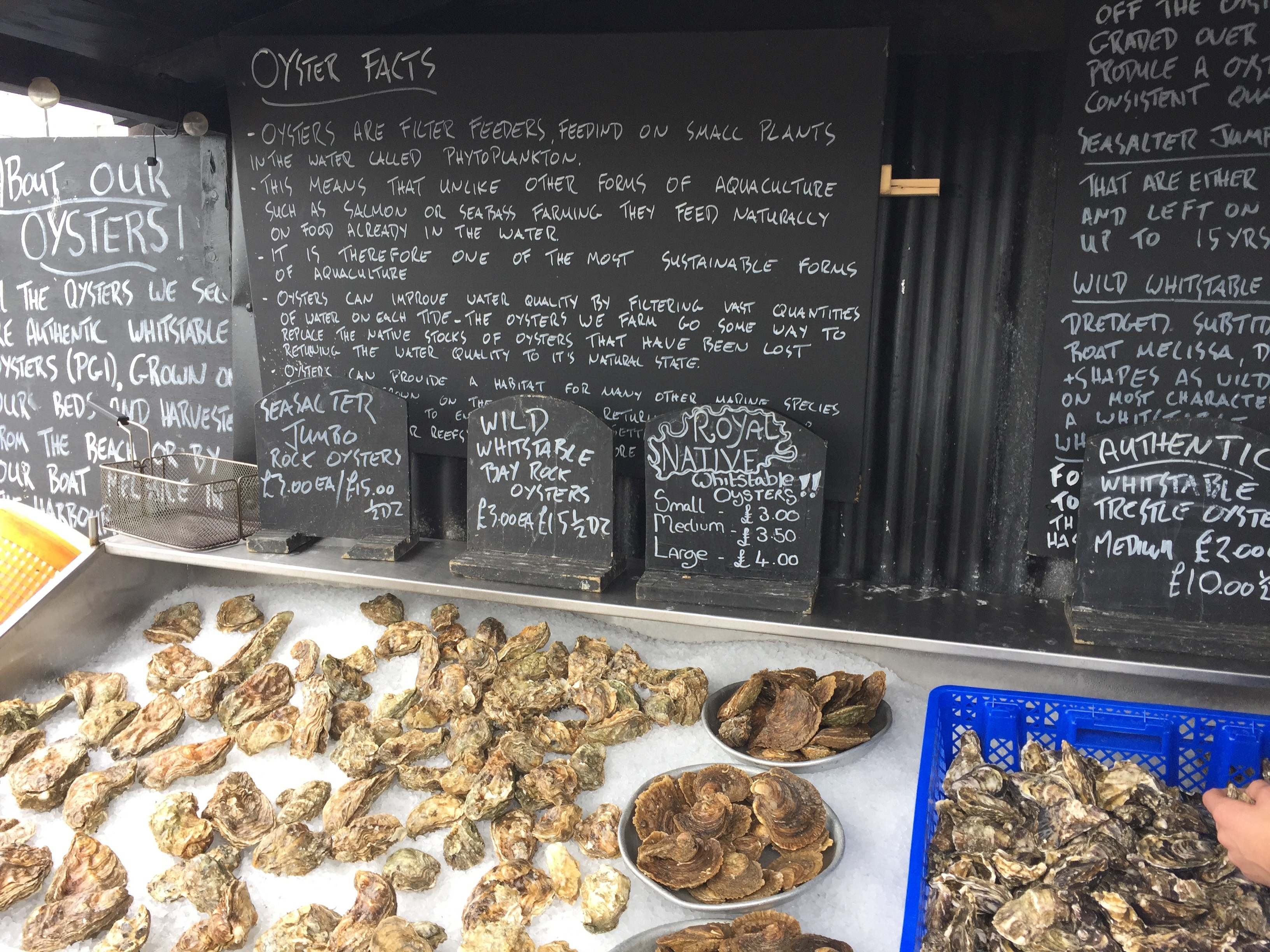 Oyster Day…Whitstable Oysters