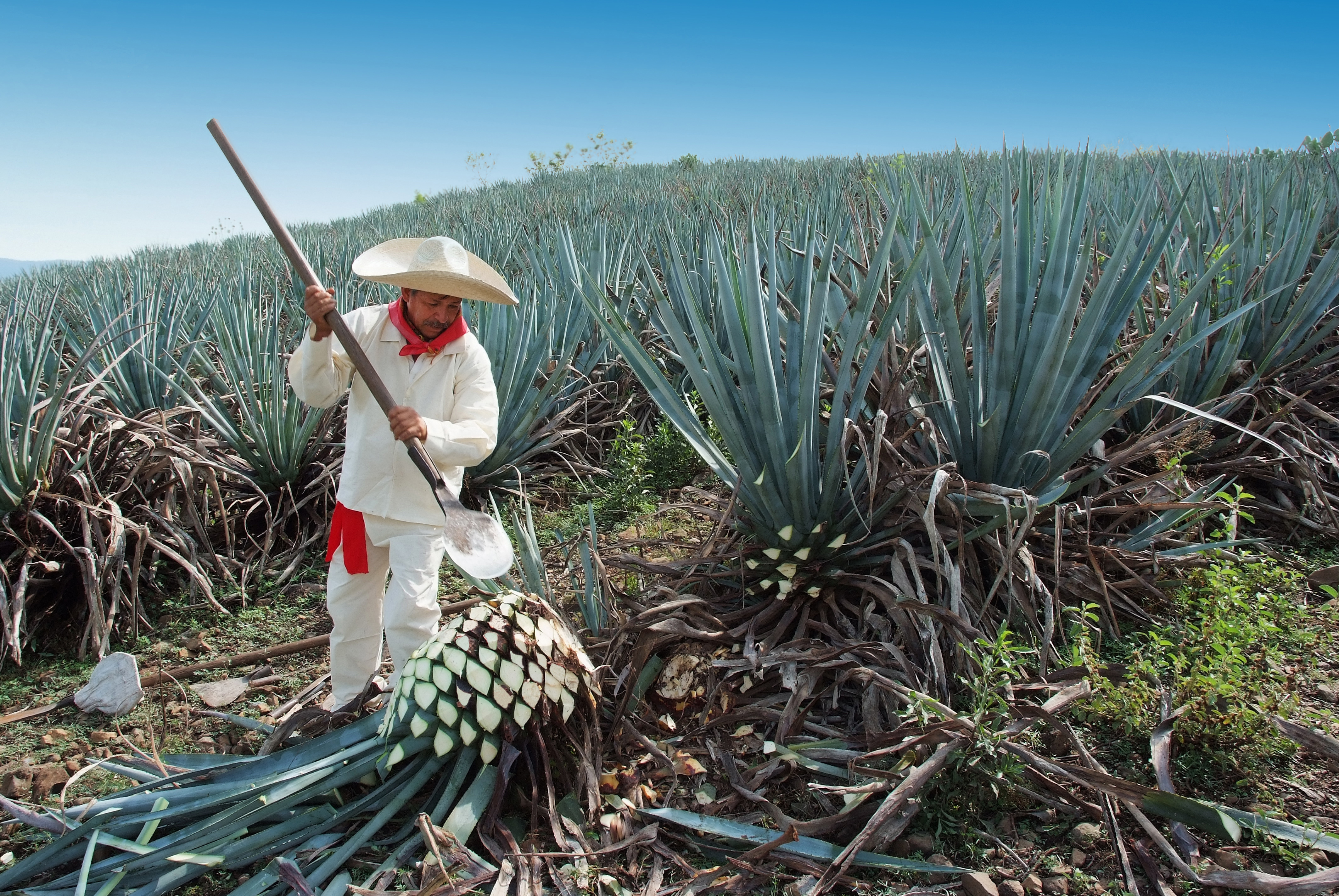 SUSTAINABLE TEQUILA