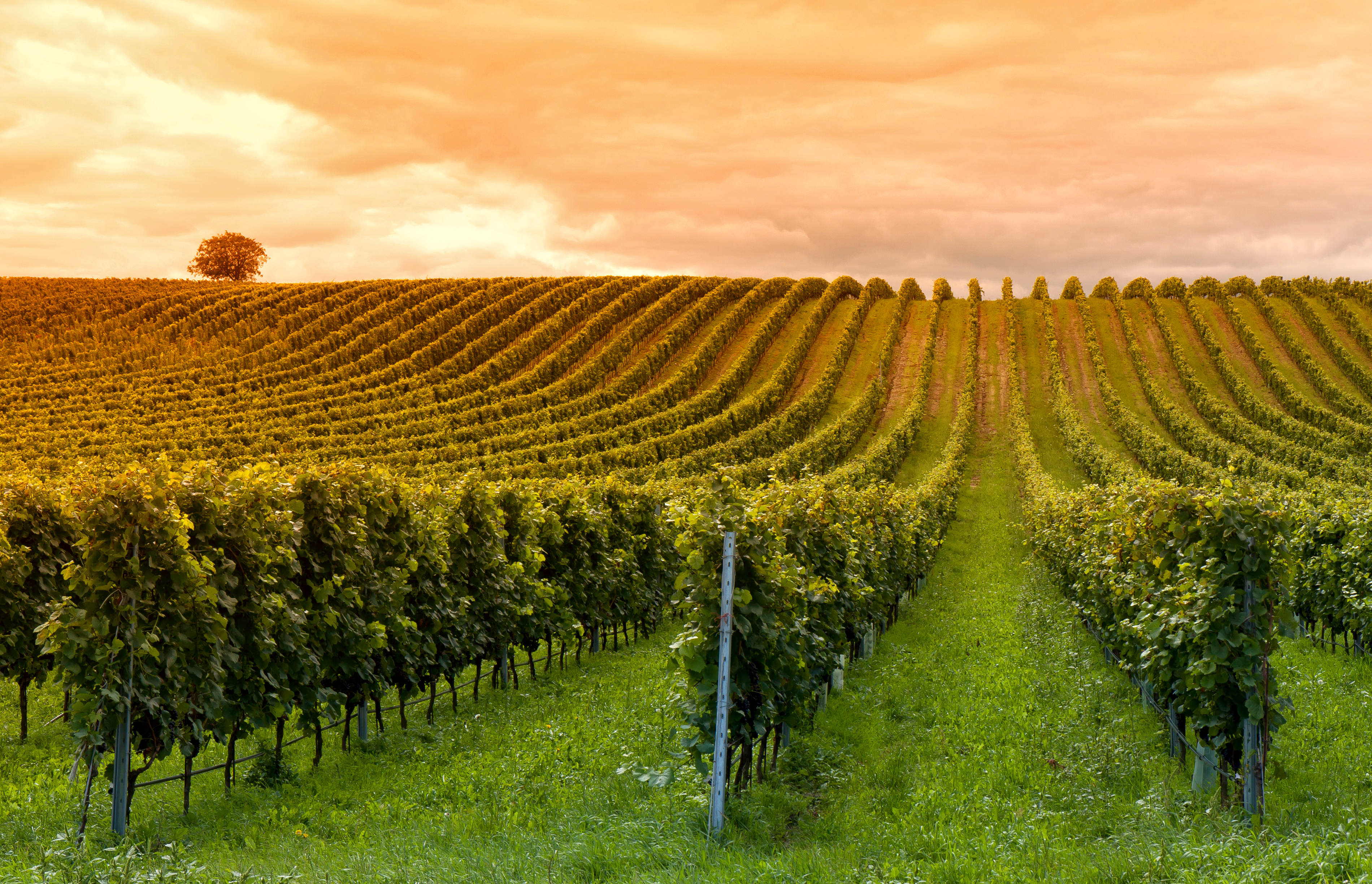 OUR TOP ECO AND SUSTAINABLE WINERIES
