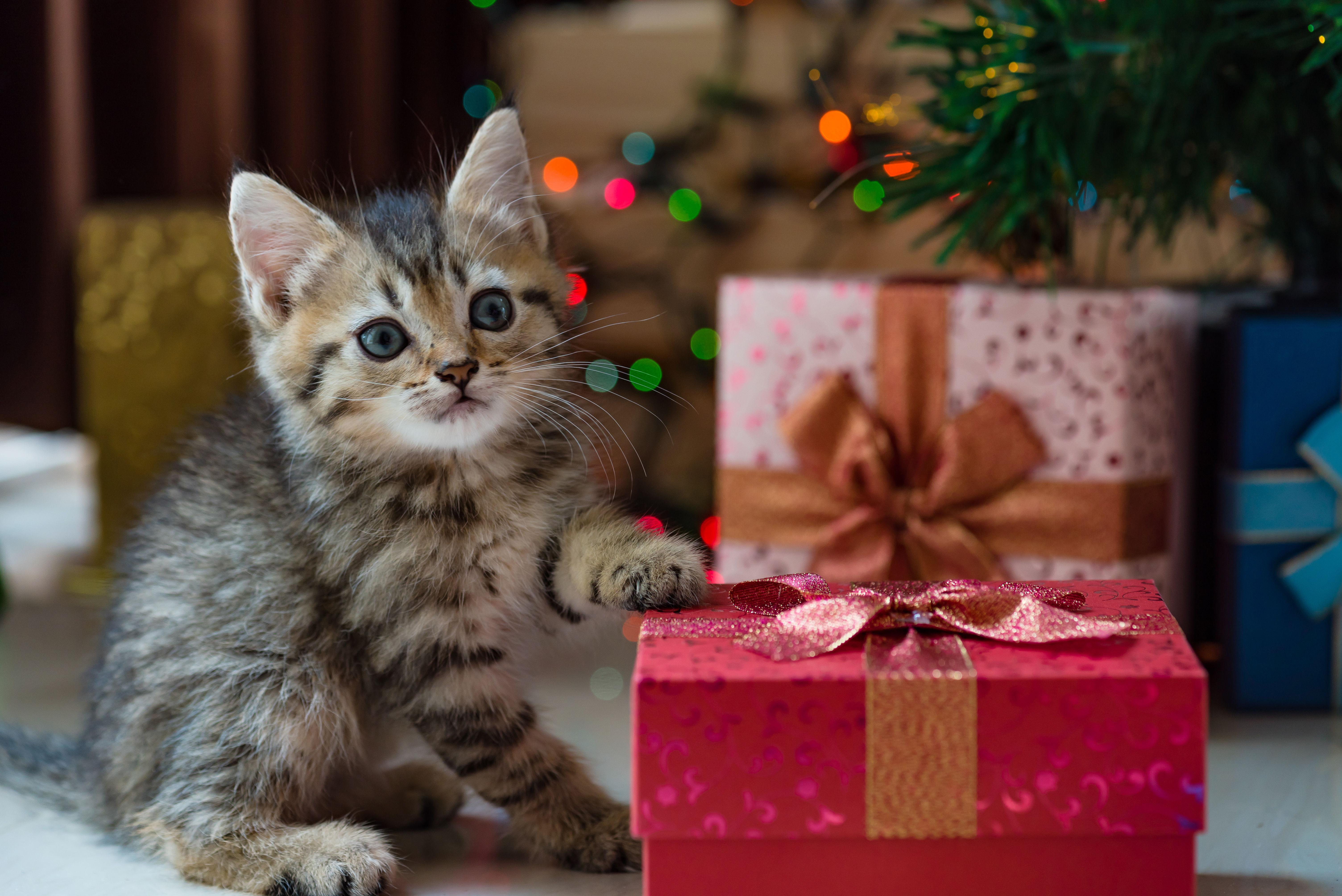ECO-FRIENDLY GIFT IDEAS FOR PETS