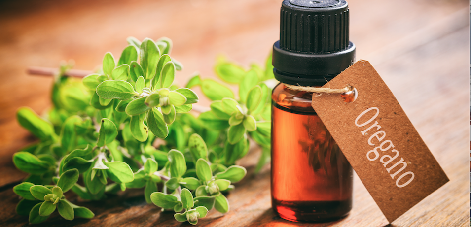 Why We Swear By Oregano Oil And You Should Too!
