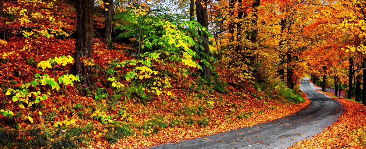 Why Fall is Our Favorite Season