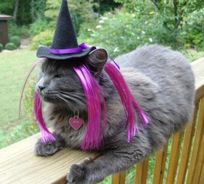 cat-hat-witch12