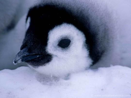 Birds-image-birds-36090554-1024-768