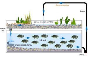http://www.aquaponicssystems.net/