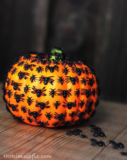 pumpkin-spider-bug