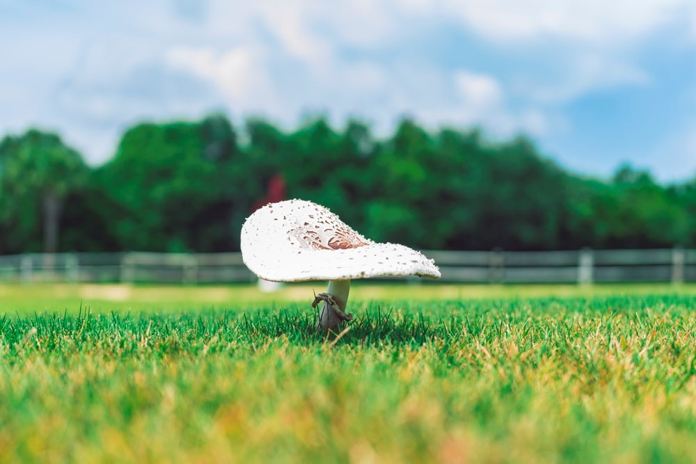 white mushroom on green grass