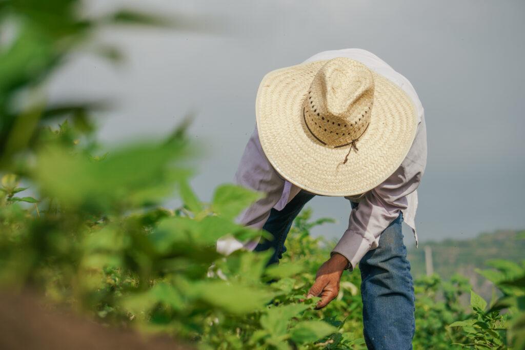 5 Ways to Celebrate National Farmer's Day